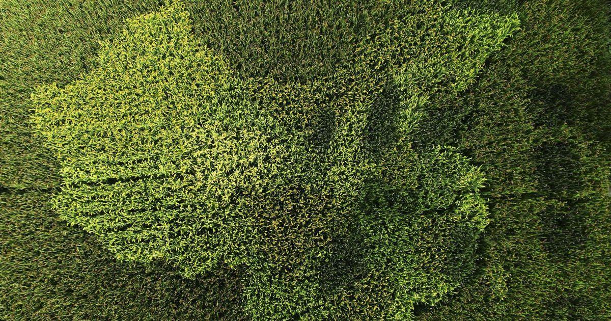 Вид с воздуха на рисовые заводы в форме карты Китая в рисовом поле на окраине Шанхая, Китай. @ Reuters