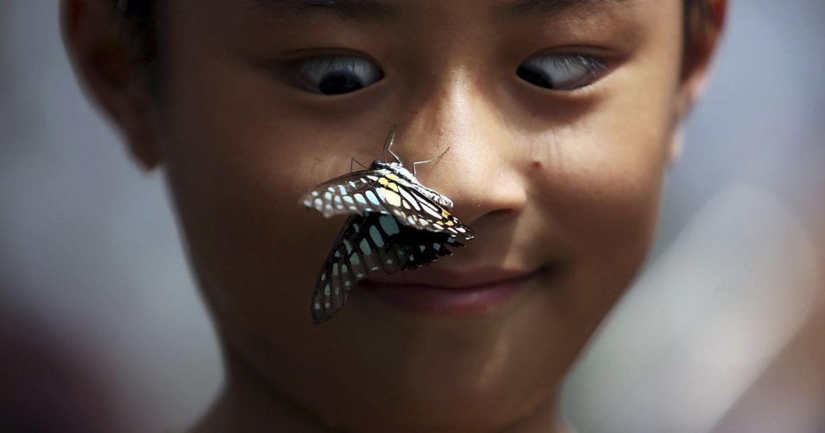 Хлопчик захоплено дивиться, як метелик сідає йому на носа під час виставки метеликів в парку у місті Куньмін, Китай. @ Reuters