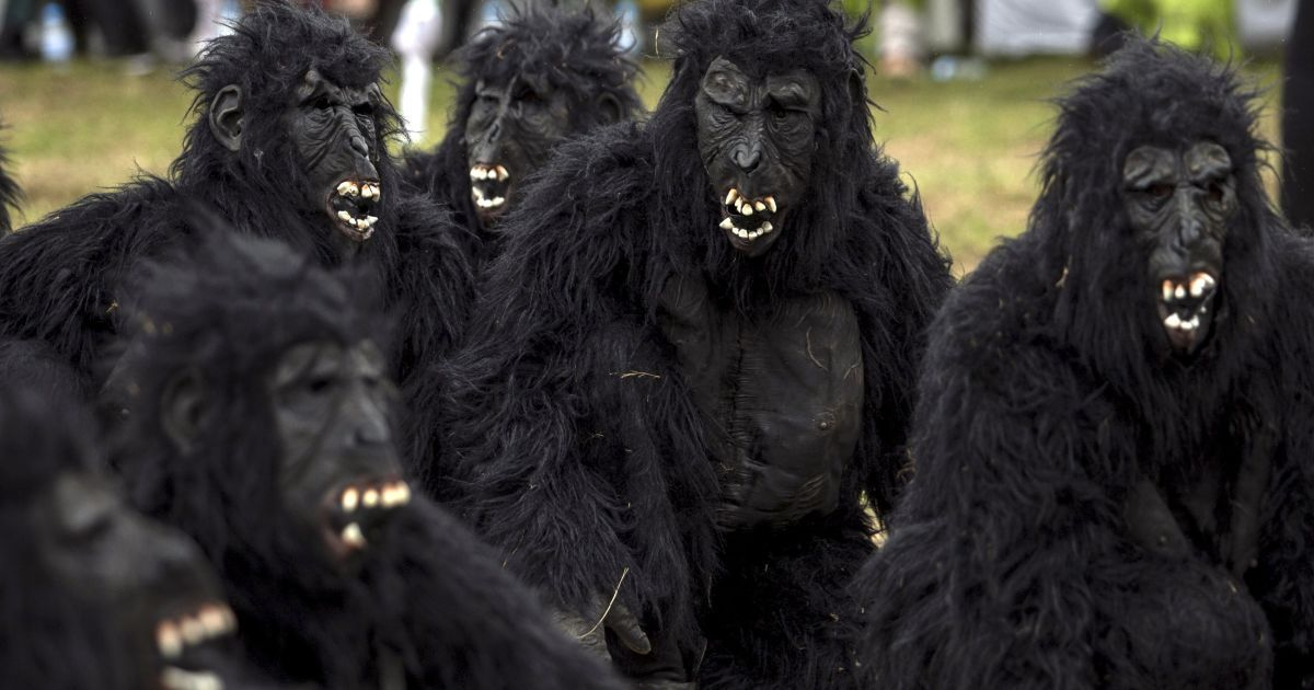 Люди в Руанде оделись в костюмы горилл, чтобы привлечь внимание к проблеме исчезновения этого вида животных. Подобные мероприятия в Руанде проводят ежегодно @ Reuters
