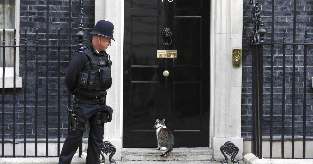 Кот Ларри ждет под дверью здания премьер-министра Великобритании на улице Даунинг, 10, в Лондоне @ Reuters