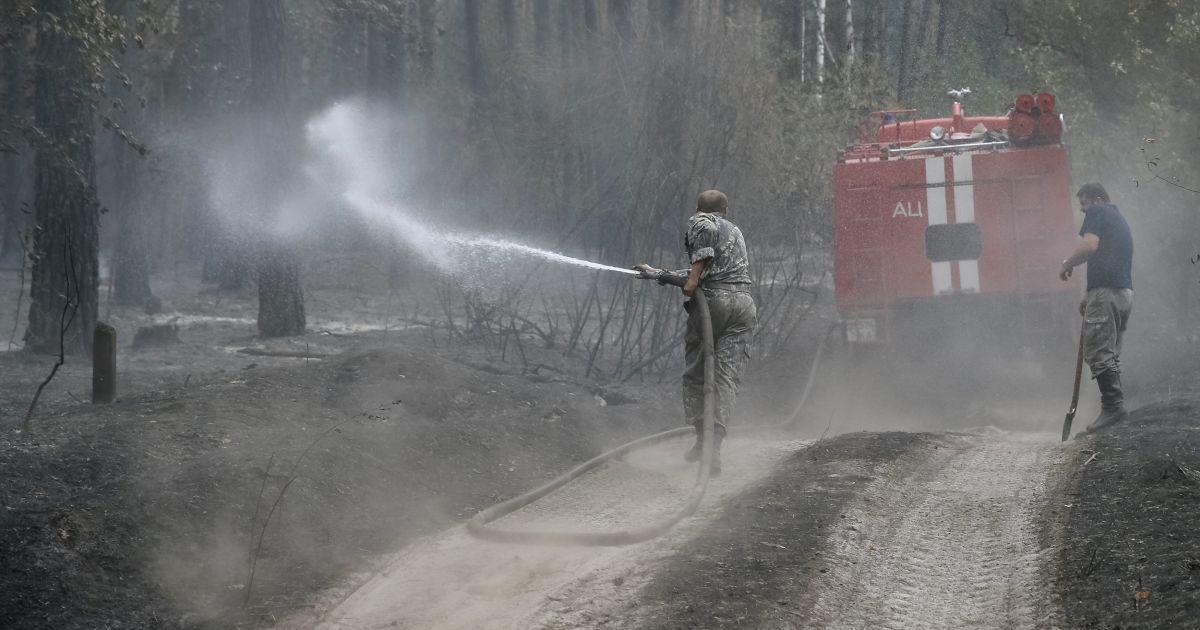Лес превратился в пепелище