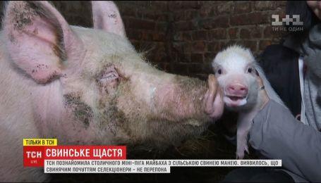 ТСН познайомила столичного міні-піга з сільською свинею