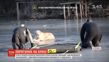 В венгерском городе Пецель среди замерзшего озера застрял лабрадор