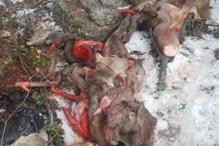 На Киевщине браконьеры жестоко выпотрошили косуль и выкинули потроха возле заправки