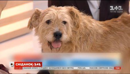 Як змінилось життя безпритульного пса Бенедикта