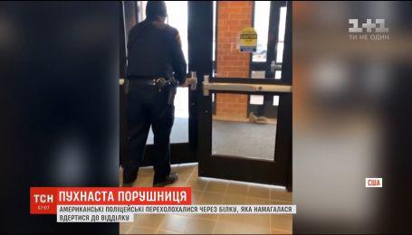 У США поліцейських налякала білка, яка намагалася вдертися до відділку