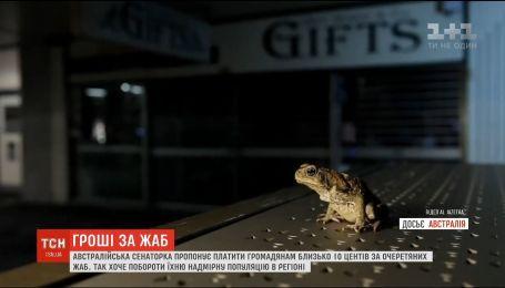 В Австралии предлагают платить гражданам за пойманных тростниковых жаб