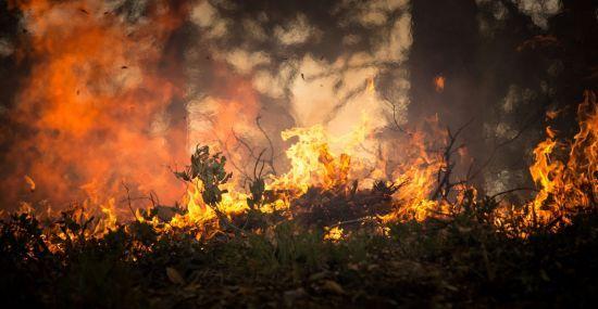 У Німеччині третю добу вирує лісова пожежа