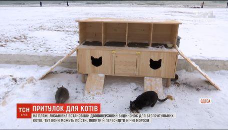 На одеському пляжі встановили двоповерховий будиночок для безпритульних котів