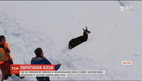 В Австрии железнодорожники выловили козу из снежной лавины