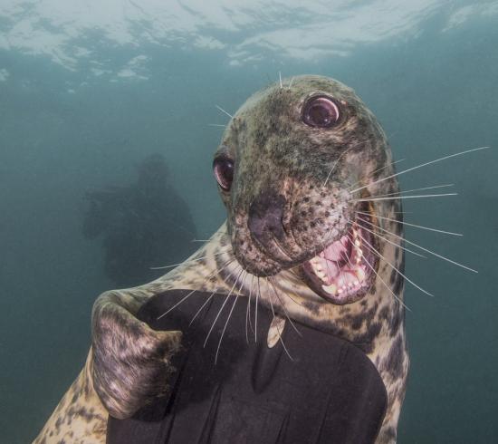 Місто в Канаді переживає нашестя тюленів