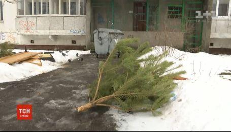 Киевлян призывают относить елки в пункты утилизации