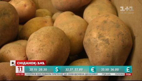 Почему и на сколько вырос в цене картофель