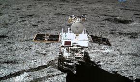 Вбила холодна ніч: загинула перша в історії рослина на Місяці