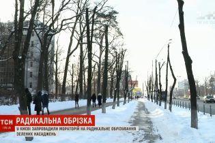 В Киеве одобрили мораторий на обрезку деревьев