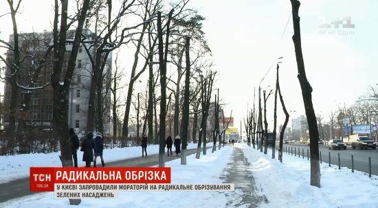 У Києві схвалили мораторій на обрізування дерев