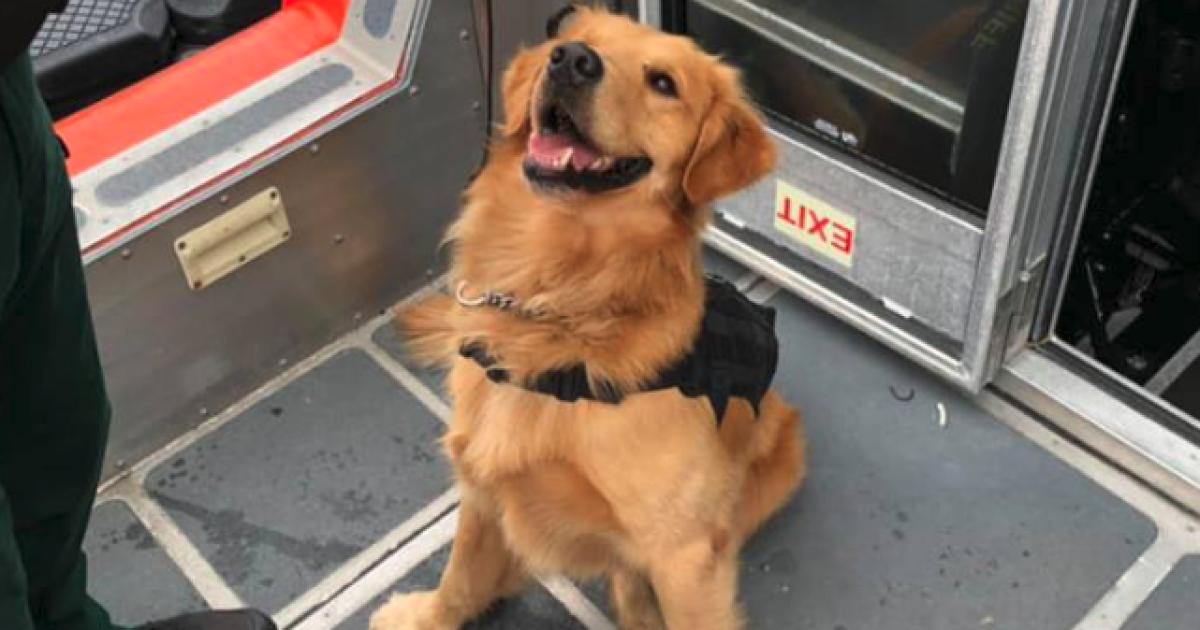 Во Флориде полицейский пес получил передозировку наркотиками, обнюхива
