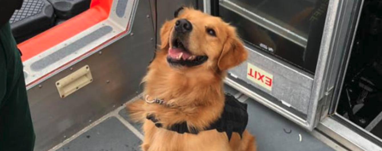 Во Флориде полицейский пес получил передозировку наркотиками, обнюхивая пассажиров рейв-круиза