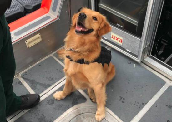 У Флориді поліцейський пес отримав передозування наркотиками, обнюхуючи пасажирів рейв-круїзу