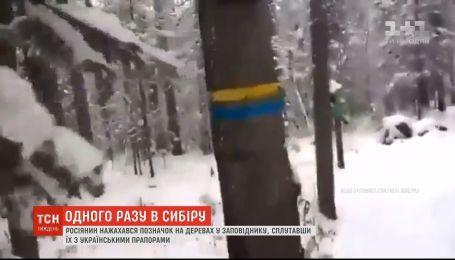 Росіянин нажахався позначок на деревах, сплутавши їх з українськими прапорами