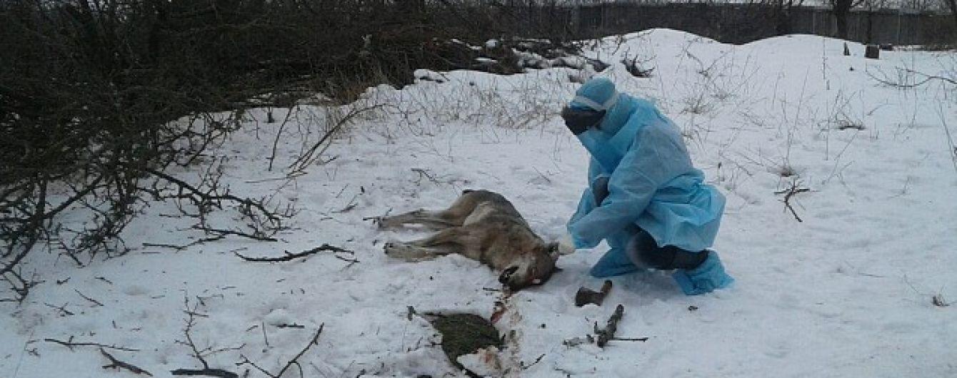 На Запорожье волк покусал трех человек, одна женщина в тяжелом состоянии