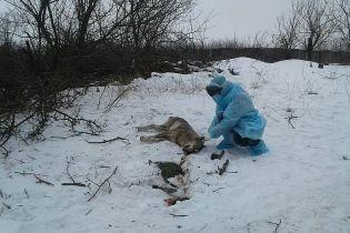 На Запоріжжі вовк покусав трьох людей, одна жінка у важкому стані