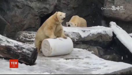 Працівники американського зоопарку показали кумедне відео, як тварини радіють снігу