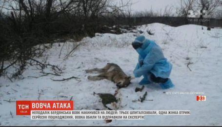 В Запорожской области волк покусал трех человек