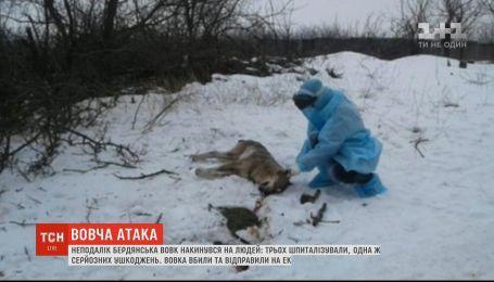 Недалеко от Бердянска волк набросился на людей