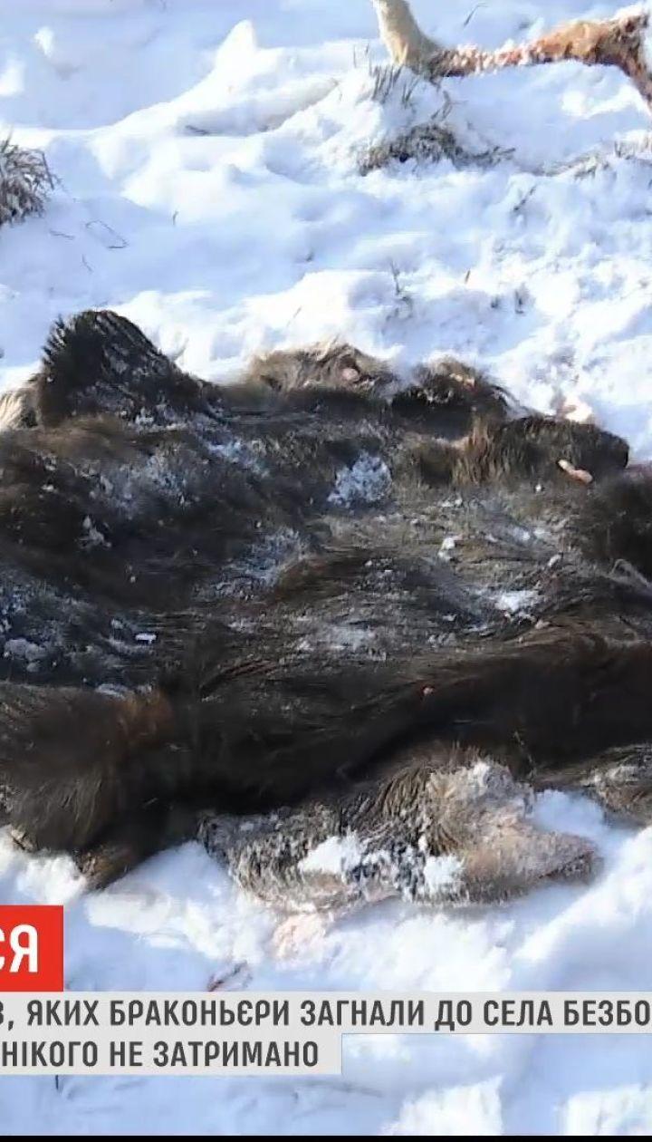 На Черниговщине браконьеры убили лося