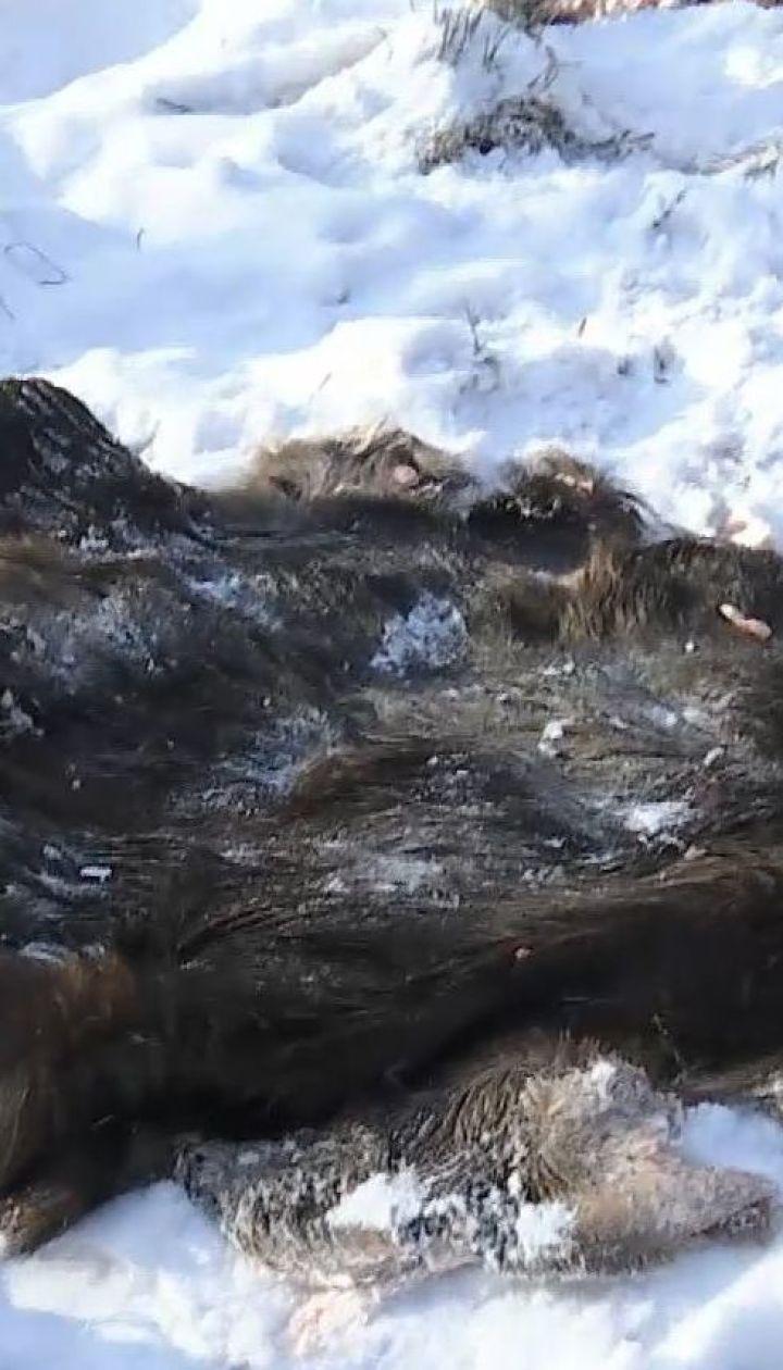 На Чернігівщині браконьєри вбили лося