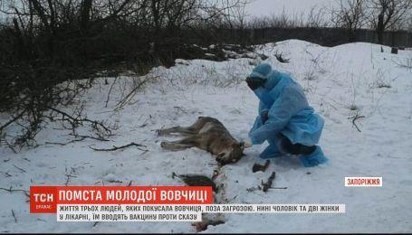 Кровавая месть: местные жители рассказали причины нападения волчицы в Запорожье