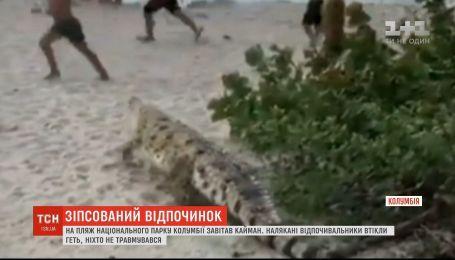 Кайман, который неожиданно появился на пляже в Колумбии, напугал отдыхающих