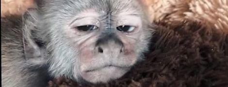 Фото зірок з минулого для флешмобу #10yearchallenge і втомлене мавпеня, якому роблять масаж. Тренди Мережі