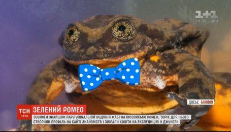 Зоологи знайшли пару унікальній водяній жабі, яка 10 років прожила на самоті в акваріумі