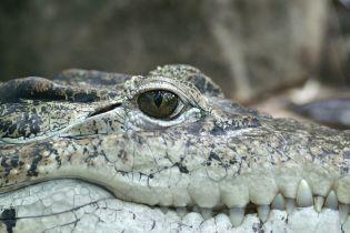 Крокодил Фиделя Кастро укусил шведа в музее Стокгольма