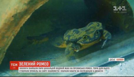 Зеленый Ромео больше не один: зоологи нашли пару знаменитой лягушке