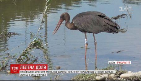 Украинским орнитологам впервые удалось вернуть в дикую природу черного аиста, выращенного в неволе
