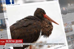 Сенсация для орнитологов: рожденного в Киеве в неволе черного аиста увидели в Греции
