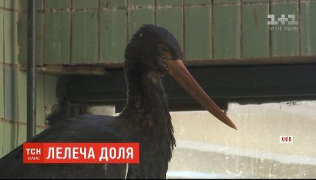 Рискованный эксперимент: орнитологи вернули в дикую природу черного аиста, выросшего в неволе