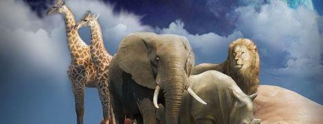 ТСН Stories. Погляньте їм у вічі. Тварини, яким загрожує вимирання