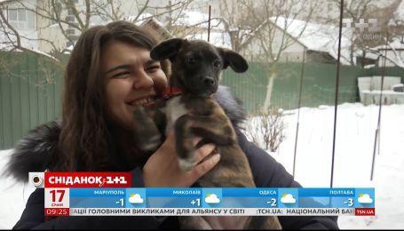 Новая жизнь Доры: как брошенный щенок получил семью и дом