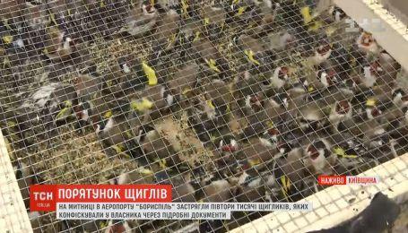 """Полторы тысячи щеглов застряли на таможне в """"Борисполе"""""""