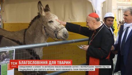 В Испании священники благословили домашних и фермерских животных