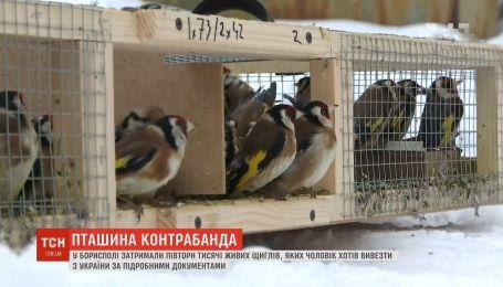 Щиглів, які застрягли на митниці в Борисполі, відпустили на волю