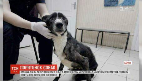 В Харькове зоозащитники изъяли собак, которых хозяйка годами держала закрытыми в квартире