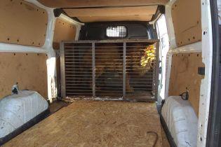 Левів та ведмедів зі скандального приватного звіринця у Покровську вивезли до реабілітаційного центру