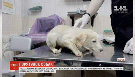 В Харькове спасли собак, которых женщина годами не выпускала из квартиры