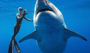 Доторкнулись до білої акули. Дайвери приголомшили світлинами випадкової зустрічі зі страшним хижаком
