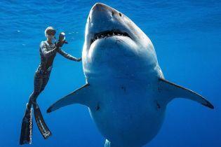 Прикоснулись к белой акуле. Дайверы ошеломили фотографиями случайной встречи со страшным хищником